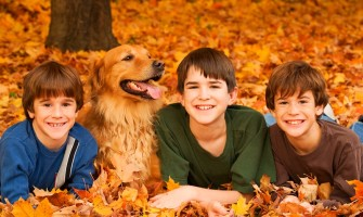 Three young boys and their Golden Retriever sitting amongst a huge pile of fallen leaves during an autumn afternoon.