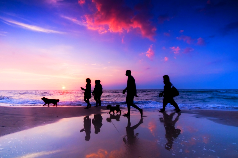 People and their pets are silhouetted against a beautiful late evening sunset while strolling on the beach.