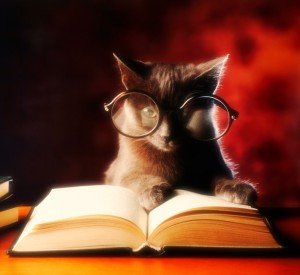 A charcoal domestic short-haired cat with large spectacles on gives the appearance of reading a book against a reddish background.
