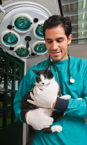 Pet adoption from a veterinary hospital is a popular way of finding a pet for your family.