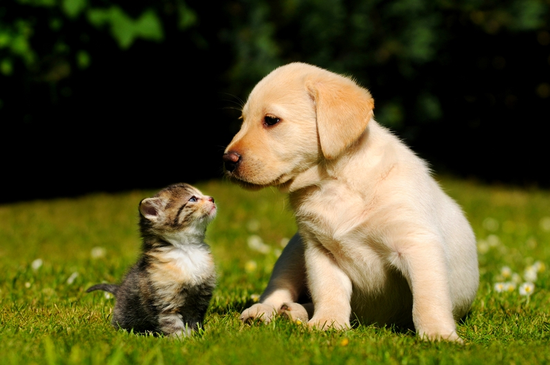 Pet Health Questions And Answers Simplify Your Life