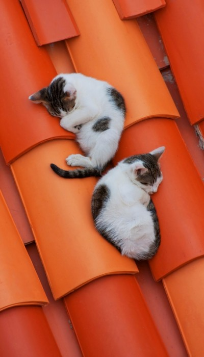 Outdoor cats need to be protected from many problems in the outdoors that can do harm to them.