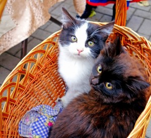 A dark tortoise shell and white and black cat looking up at the camera while sitting in a beige colored wicker basket with a handle on a brick patio.