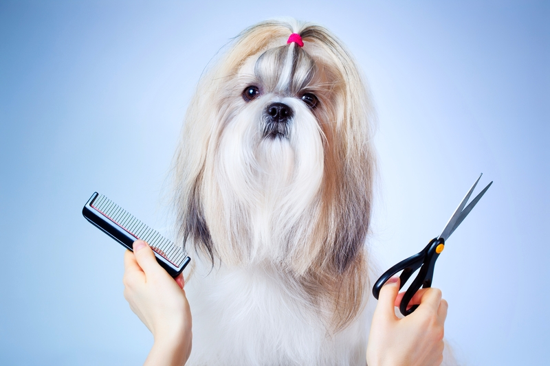 Dog grooming is an important way of maintaining a clean, healthy coat and prevents skin diseases at the same time.
