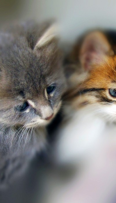 Cat nutrition is an important factor in the development of a kitten.