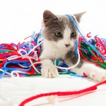 A little charcoal and white kitten is surrounded by a pile of red, white, green and blue yarn.