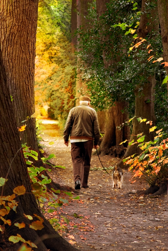 An older man and his terrier dog on a leash are walking amongst tall trees on a bike path during an afternoon autumn day.