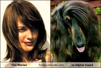 A split shot of a young brunette woman next to an attractive dark haired Afghan Hound.