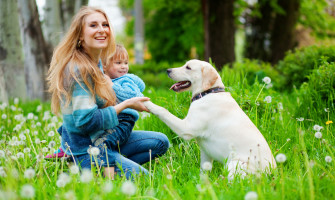 A young woman in a blue sweater is holding her daughter and the paw of their labrador retriever in a dandelion laden field.