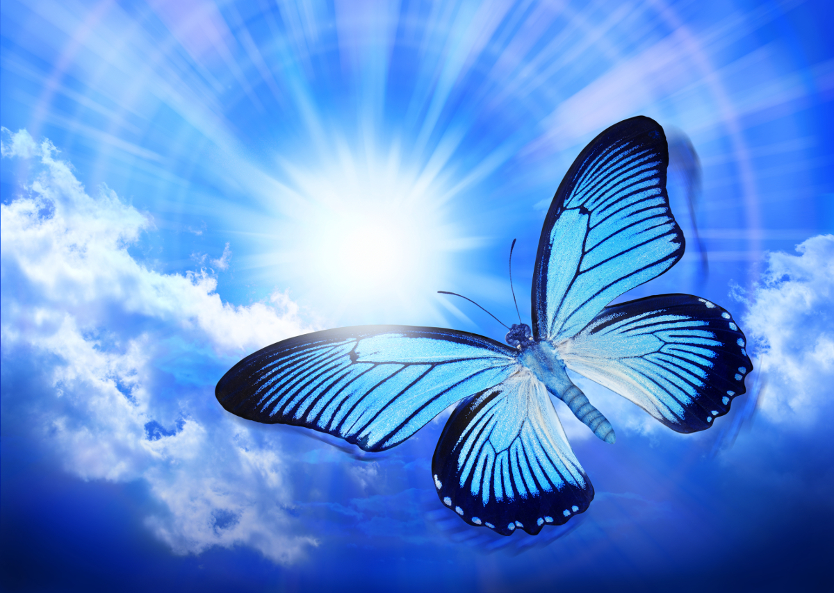 A Blue Butterfly is in suspended motion flying against a dark blue sky.