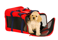 A Cocker Spaniel puppy is sitting at the entrance of a red and blue safety car carrier with a zippered front.