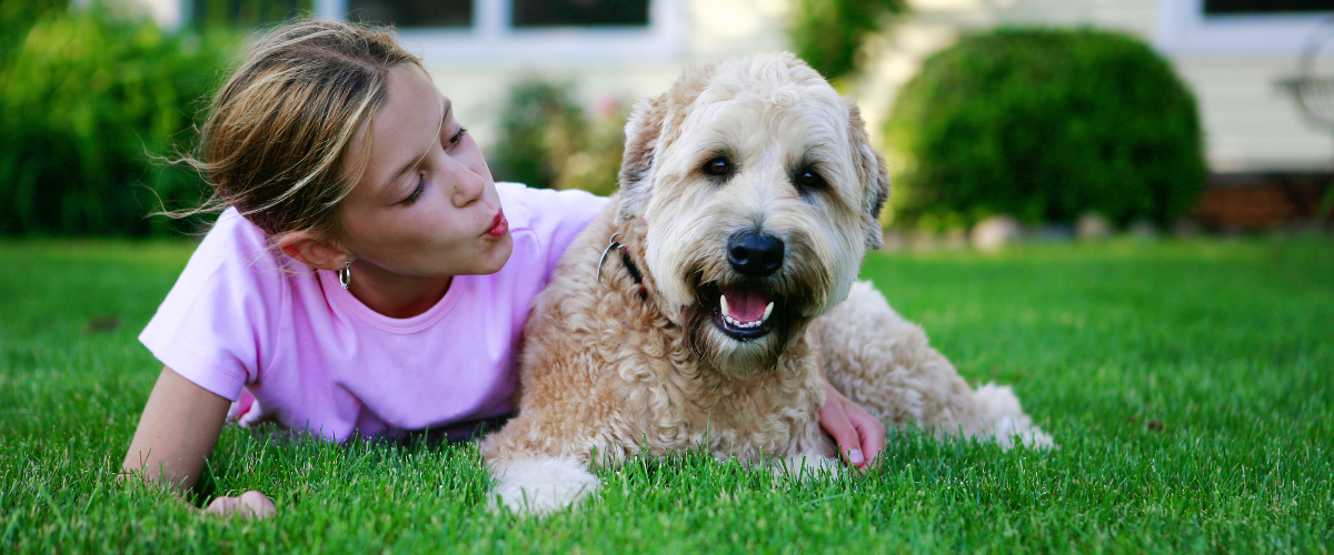 The size of yard for a pet will often determine the size of a pet that can be housed there.