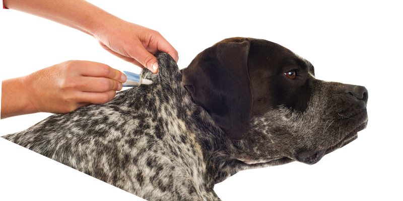Flea and tick control is important when it comes to preventing allergies in dogs and cats as well as the spread of disease in humans and pets.