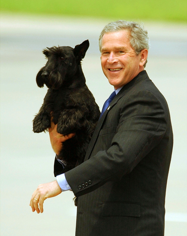 Barney the Scottish Terrier is being carried by U.S. president George W. Bush