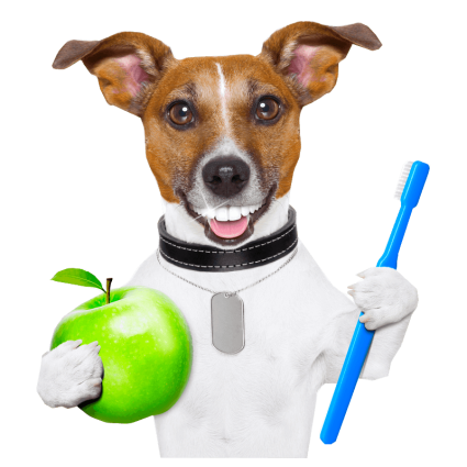 A tan and white dog with an exaggerated human like dental pattern is holding a green apple in one paw and a blue toothbrush in the other.