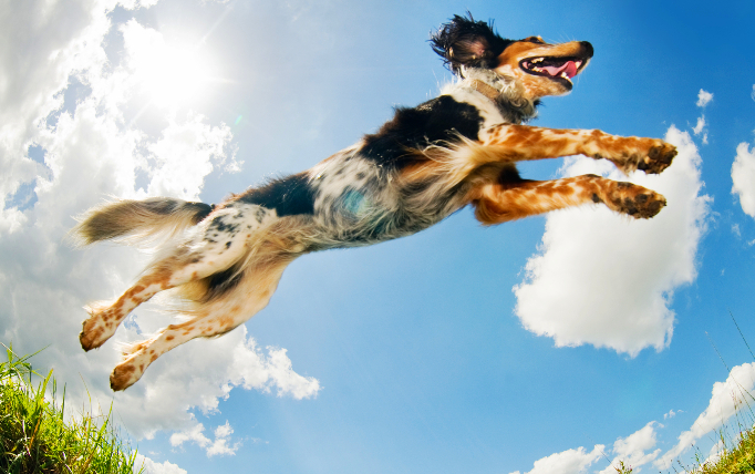 Dogs having fun is a big part of animal psychology and socialization.