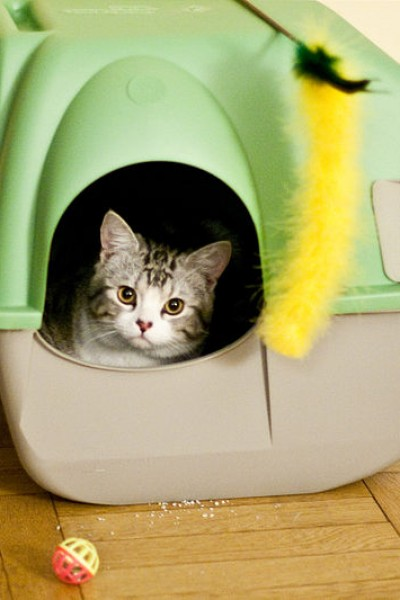 Cat litter box problems are very common and most cat owners will have to deal with it sooner or later.