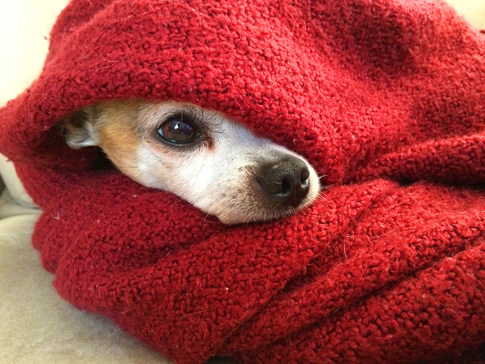 Taking care of pets involves putting out a blanket that a baby in the hospital slept in and putting it on the floor for pets to smell.