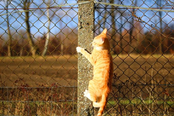 Protecting dogs using a safe fence is the smart way to save lives and liability claims.