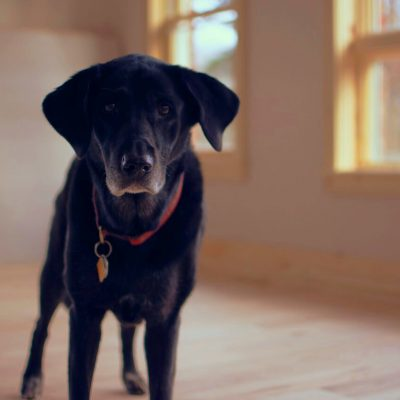 Older dogs have to navigate life as they get older. Arthritis often makes getting around more difficult.
