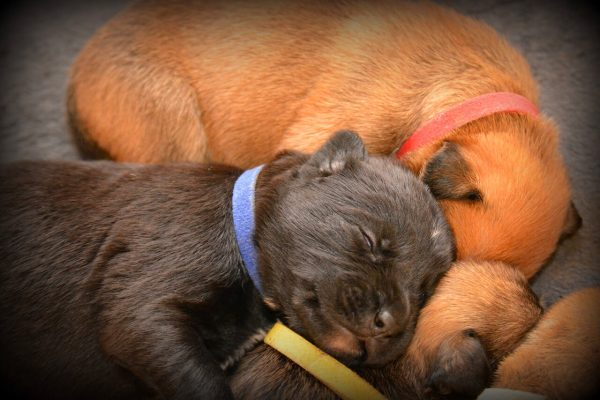 Pets sleep many hours during the day with the young and the old sleeping more than others.