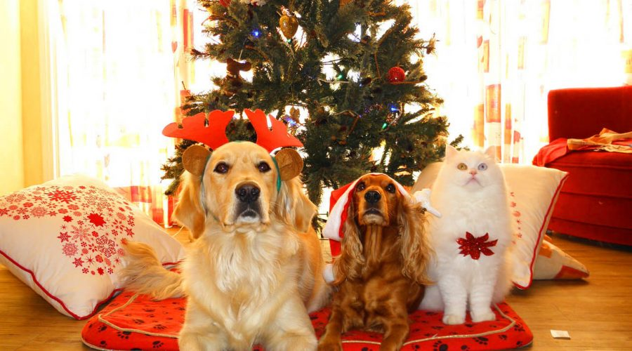 When pets rule Christmas anything can happen.